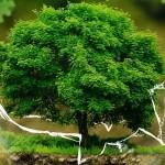 Proces produkcji kontra ochrona środowiska