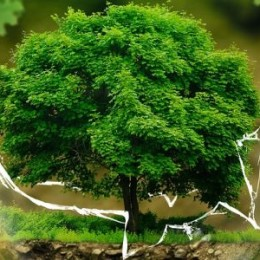 environmental-protection-326923_1280header