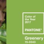 Kolor 2017 Roku
